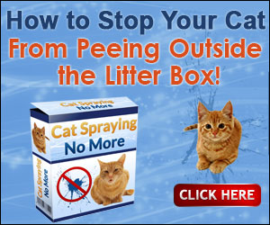 Stop Your Cat Spraying In The House Camera Experts